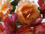 Rose Bouquet Close Up I Photo by Nicole Katano