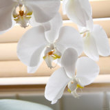 White Orchids II Photo by Nicole Katano