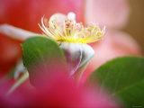 Flower Bud Photo by Nicole Katano