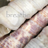 Breathe Prints by Nicole Katano