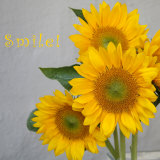 Smile: Sunflower Bouquet Poster von Nicole Katano
