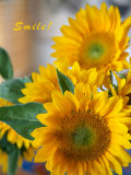 Smile: Sunny Sunflower Print by Nicole Katano
