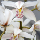 Orchid Closeup I Photo by Nicole Katano