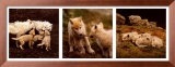 Wolf Family Portrait Art by Jim Brandenburg