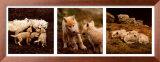 Wolf Family Portrait Art by Jim Brandenburg