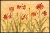 Row of Red Amaryllis Framed Canvas Print by Cheri Blum