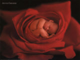 Jake in Red Rose Prints by Anne Geddes