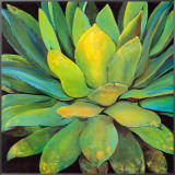 Agave Framed Canvas Print by Jillian David