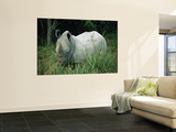 Endangered White Rhinoceroses Wall Mural by Joel Sartore