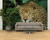 A Jaguar Pauses in the Foliage Wall Mural – Large by Steve Winter
