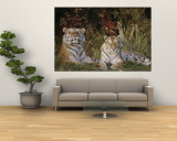 A Portrait of Two Captive Siberian Tigers Wall Mural by Dr. Maurice G. Hornocker