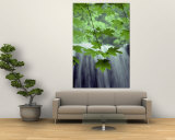 Maple Leaves against a Waterfall Backdrop Wall Mural