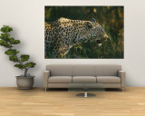 A Leopard Stalks its Prey Wall Mural by Nicole Duplaix