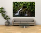 Two Small Waterfalls Flow into Fresh Water Pond in a Rain Forest Wandgemälde von Todd Gipstein