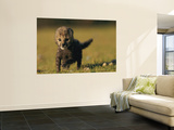 View of a Rare King Cheetah Wall Mural by Chris Johns
