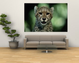 Portrait of a Juvenile African Cheetah Wall Mural by Chris Johns