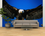 Bald Eagle (Haliaeetus Leucocephalus), USA Wall Mural – Large by Mark Newman