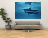 A Pair of Spotted Dolphins Premium Wall Mural by Wolcott Henry