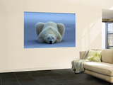 Polar Bear Wall Mural by Norbert Rosing