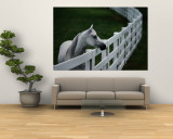 White Horse Staring over a Wooden Fence Wall Mural by Raymond Gehman