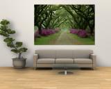Un hermoso camino bordeado de árboles y azaleas moradas Mural por Sam Abell