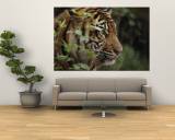 A Sumatran Tiger in the Asian Domain Exhibit Wall Mural by Michael Nichols