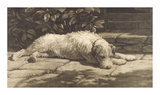 The Terrier Premium Giclee Print by Herbert Dicksee