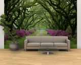 A Beautiful Pathway Lined with Trees and Purple Azaleas Wall Mural – Large by Sam Abell
