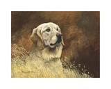 Golden Labrador Premium Giclee Print by Richard Britton
