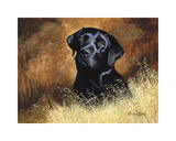 Black Labrador Premium Giclee Print by Richard Britton