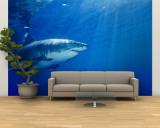 Great White Shark Vægplakat, stor af Brian J. Skerry