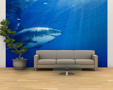 Great White Shark Wall Mural – Large by Brian J. Skerry