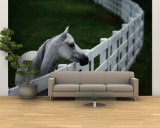 White Horse Staring over a Wooden Fence Wall Mural – Large by Raymond Gehman