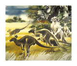 Kangaroo Premium Giclee Print by Wolfgang Weber