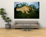 An African Cheetah Runs at the Home of its Owner Wall Mural by Michael Nichols