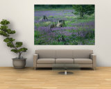 A Field of Violets Wall Mural by Raymond Gehman