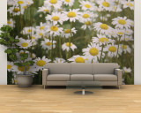 View of a Field of Daisies Wall Mural  Large by Paul Zahl