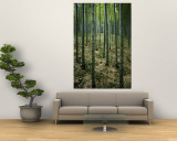 Slender Green Trunks in a Bamboo Forest Wall Mural by Luis Marden