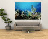 Underwater View of a Reef in the British Virgin Islands Reproduction murale g&#233;ante par Raul Touzon