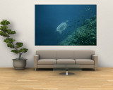 A Large Tropical Turtle Swims Underwater Near a Coral Reef Wall Mural