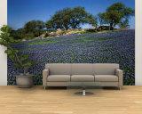 Bluebonnets, Hill Country, Texas, USA Vægplakat, stor af Dee Ann Pederson