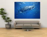 Petits poissons nageant à côté d'un requin-baleine (Rhincodon typus) Reproduction murale par Brian J. Skerry