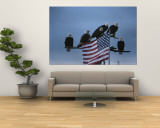 A Group of Northern American Bald Eagles Sit on a Trees Sparse Perches Wall Mural by Norbert Rosing
