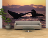 Humpback Whale at Sunset, Inside Passage, Alaska, USA Wall Mural – Large by Stuart Westmoreland