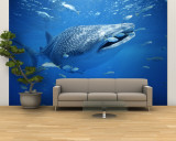 Small Fish Swim Along with a Whale Shark, Rhincodon Typus Wall Mural – Large by Brian J. Skerry