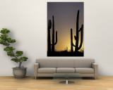 Saguaro Cacti, Organ Pipe National Monument, Arizona, USA Wall Mural by William Sutton