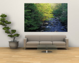 Elkmount Area, Great Smoky Mountains National Park, Tennessee, USA Wall Mural by Darrell Gulin
