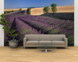 Lavender Field, Provence, France Wall Mural – Large by Gavriel Jecan