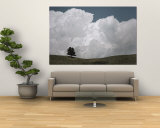 A Lone Ponderosa Pine Tree under a Cloud-Filled Sky Wall Mural by Annie Griffiths