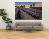 Lavender Field, Provence, France Wall Mural by Gavriel Jecan
